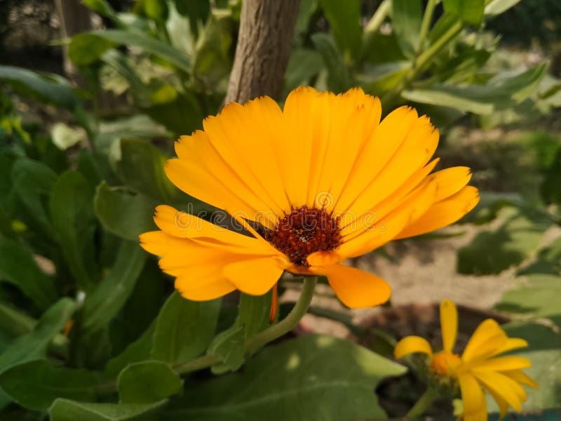 Una imagen de la flor del yallow imagen de archivo