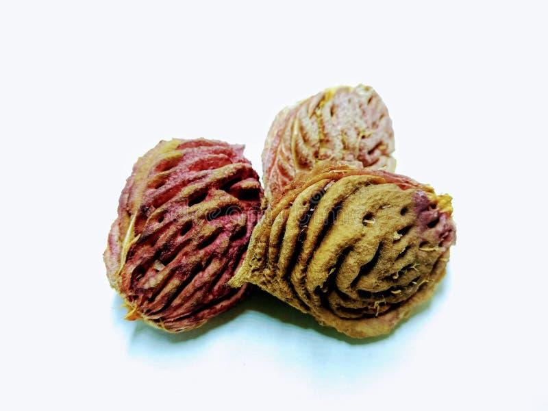 Una imagen de la semilla del melocotón en el fondo blanco, fotos de archivo