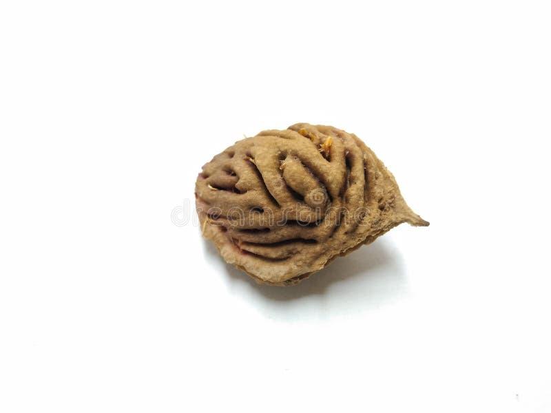 Una imagen de la semilla del melocotón en el fondo blanco, imágenes de archivo libres de regalías