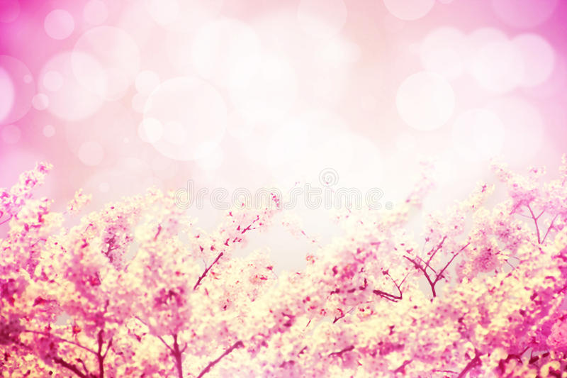 Una imagen de las flores de cerezo rosadas del tono florece y bokeh stock de ilustración