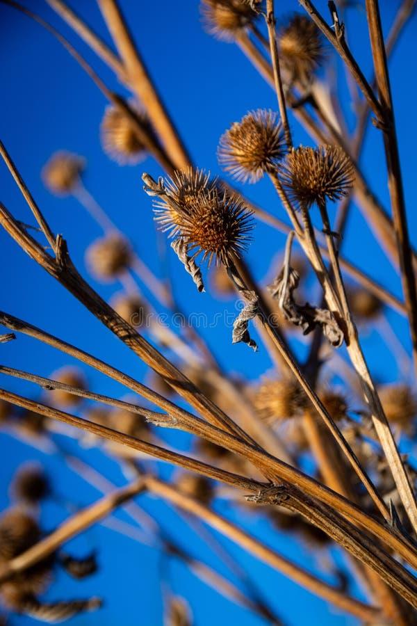 Una imagen de rebabas contra un cielo azul fotos de archivo