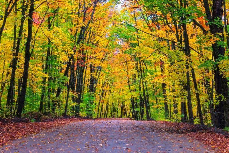 Una impulsión de la mañana en Algonquin entre colores del otoño fotos de archivo