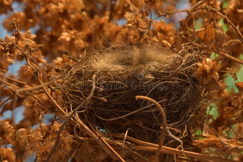 Una jerarquía vacía del ` s del pájaro en un matorral de saltos fotografía de archivo libre de regalías