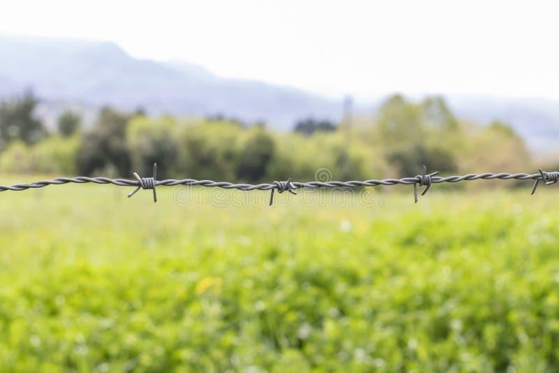 Una l?nea de alambre de p?as gris con tres nudos contra un fondo de la hierba verde y de los ?rboles imagenes de archivo
