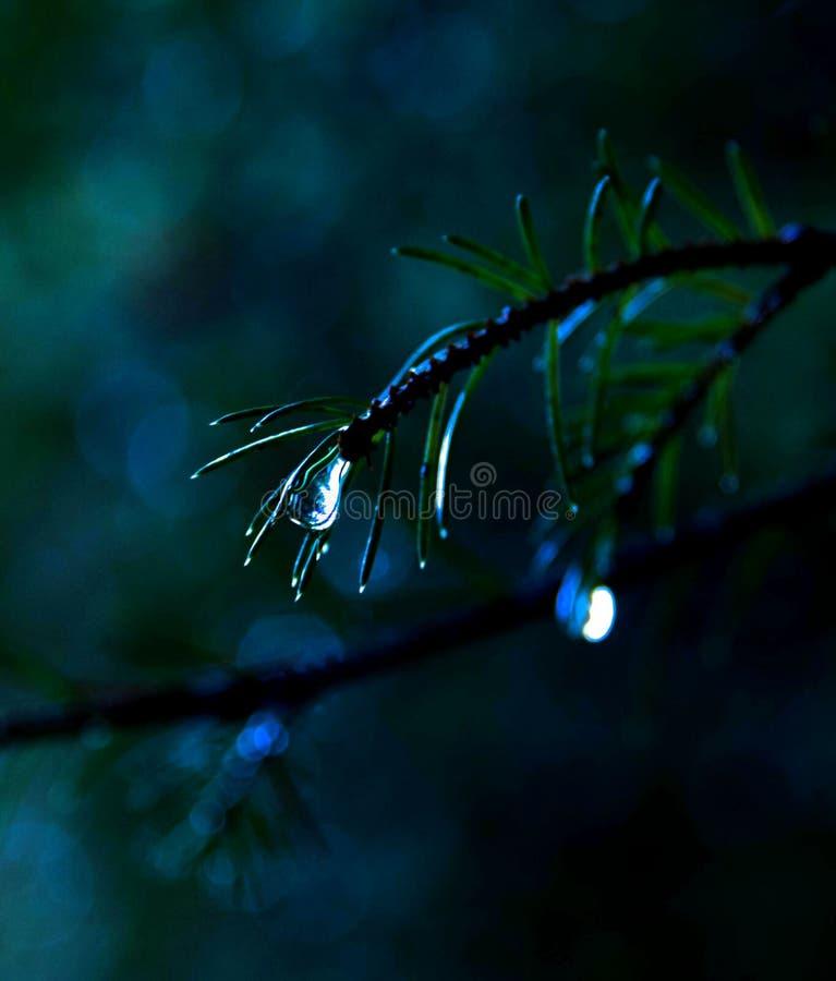 Una lacrima della natura fotografie stock libere da diritti