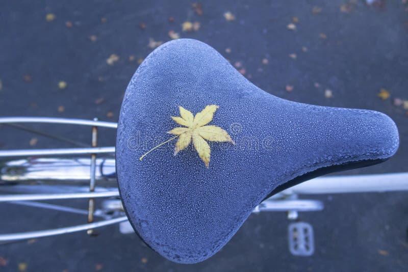 Una licencia amarilla del arce en asiento de bicicleta congelado durante otoño foto de archivo