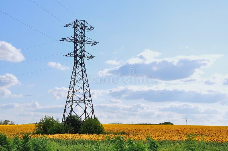 Download Una Linea Ad Alta Tensione Nel Campo Dei Girasoli Fotografia Stock - Immagine di fiore, costruzione: 56875470