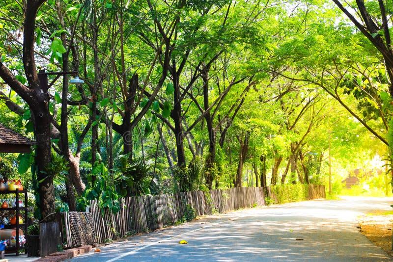 Una linea di alberi e di recinto di legno Bordering fotografia stock libera da diritti