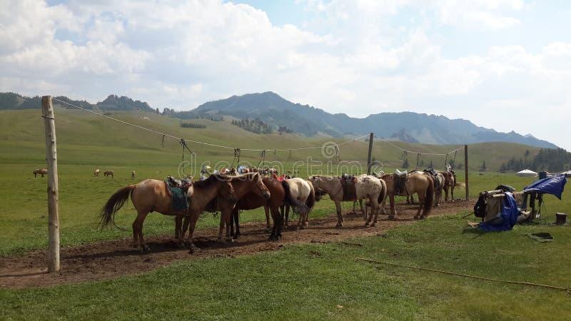Una linea di cavalli immagine stock