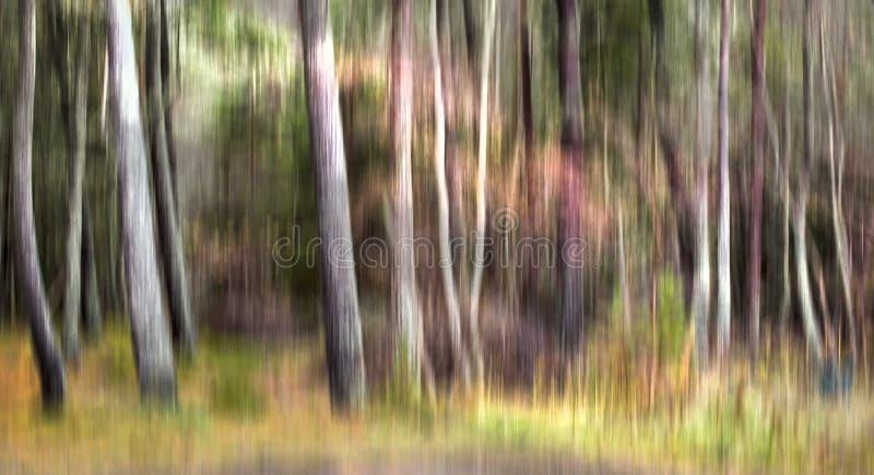 Una linea di tronchi di albero che mostrano espressamente il movimento della macchina fotografica fotografie stock