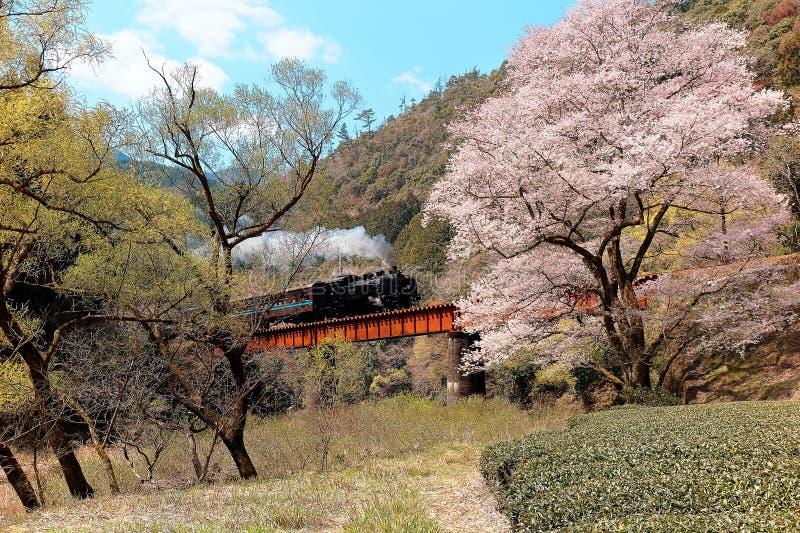 Una locomotora de vapor que viaja en un puente por un árbol flourishing de Sakura de la flor de cerezo cerca de la estación de Ka fotografía de archivo libre de regalías