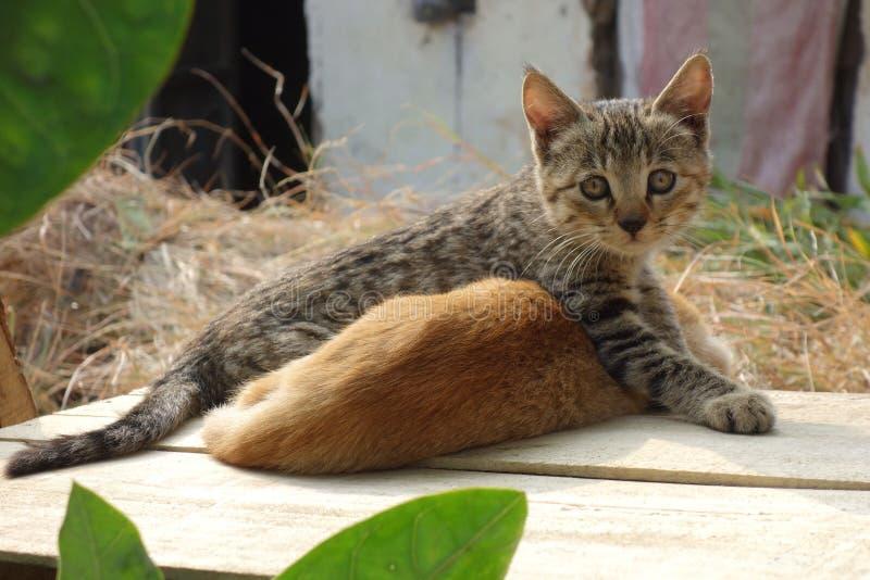 Una lotta di due gattini immagine stock