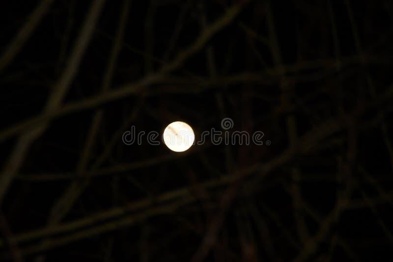 Una luce della luna brillante fotografia stock