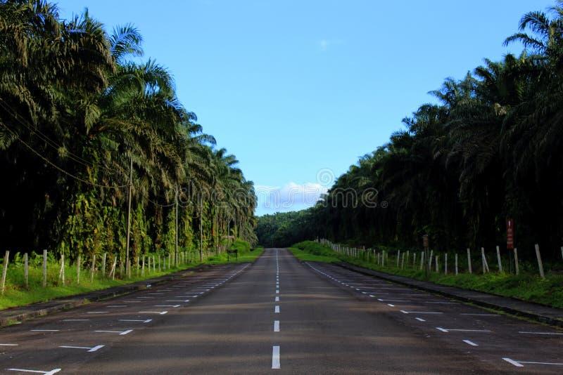 Una lunga strada che conduce attraverso una piantagione dell'olio di palma fotografia stock libera da diritti