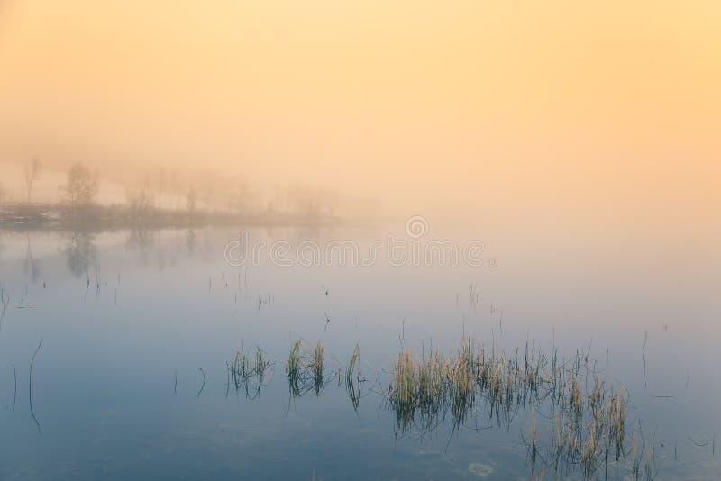 Una mañana brumosa hermosa, colorida en Noruega en el lago Reflexiones del árbol en el agua Paisaje brumoso del otoño imágenes de archivo libres de regalías