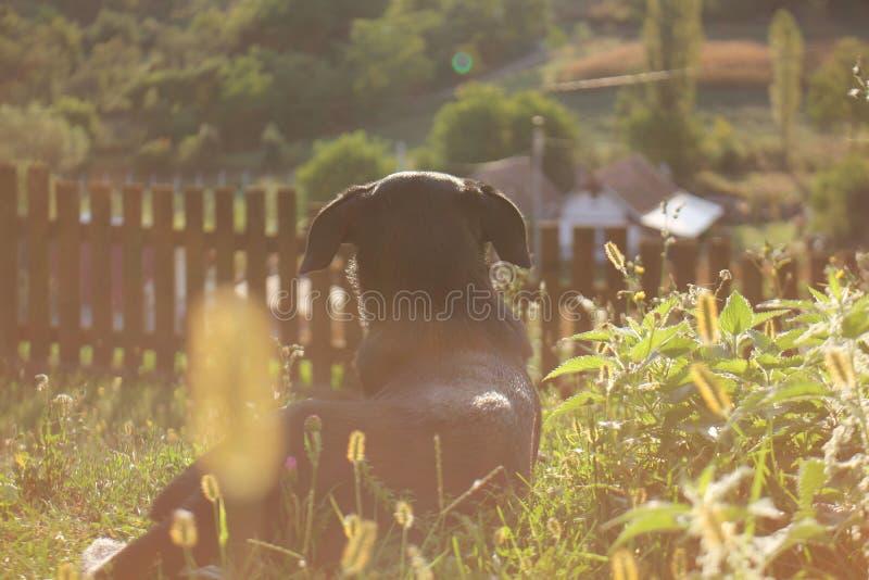 Una mañana del otoño de un perro imagen de archivo