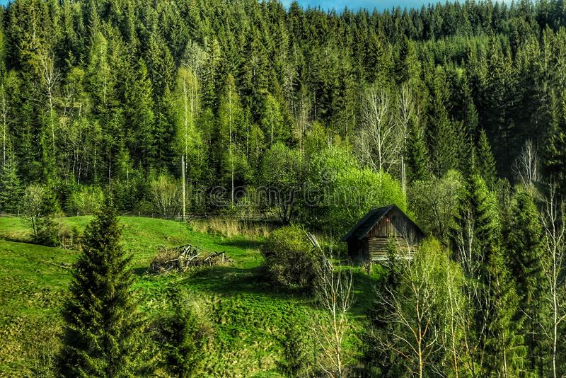 Una mañana en el bosque fotografía de archivo libre de regalías