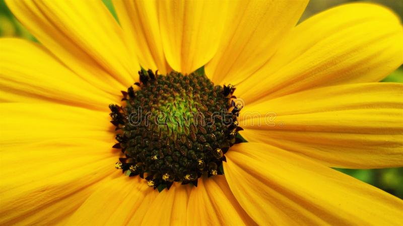 Una macro del fiore giallo fotografie stock libere da diritti