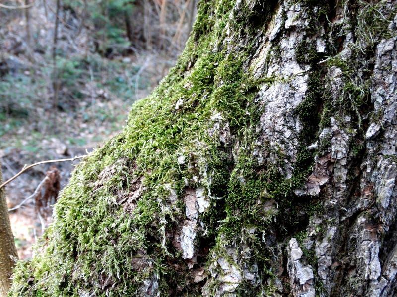 Una macro foto di una corteccia di un albero immagini stock libere da diritti