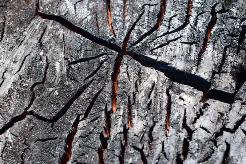 Una madera carbonizada en un corte Madera chamuscada por el fuego foto de archivo libre de regalías
