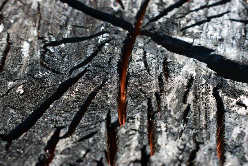 Una madera carbonizada en un corte Madera chamuscada por el fuego imagen de archivo