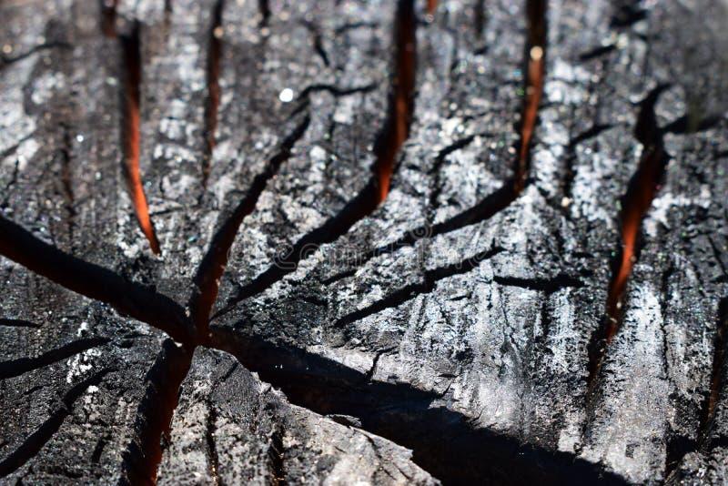 Una madera carbonizada en un corte Madera chamuscada por el fuego fotografía de archivo