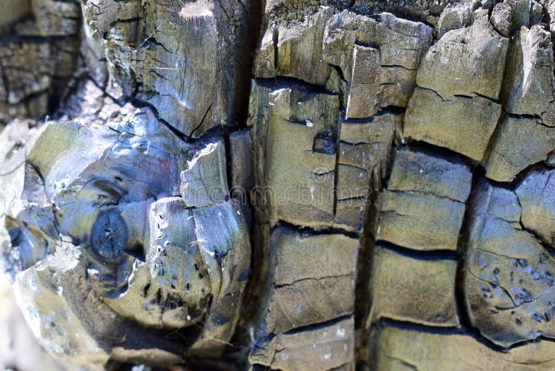 Una madera carbonizada en un corte Madera chamuscada por el fuego fotografía de archivo libre de regalías