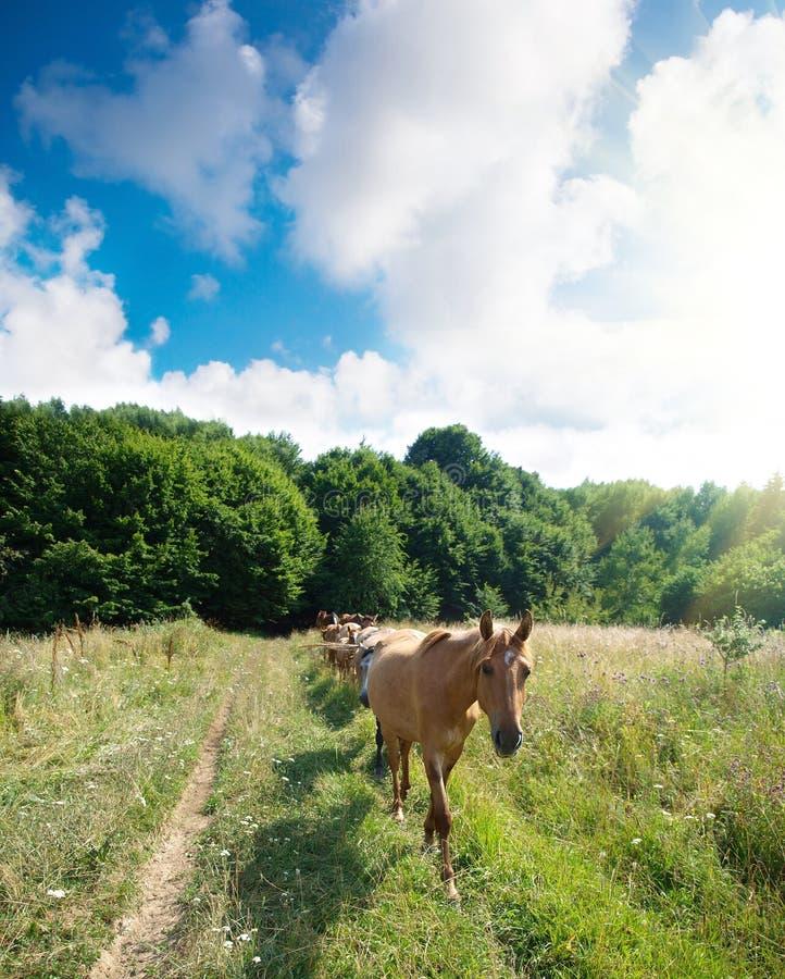 Una manada de caballos foto de archivo
