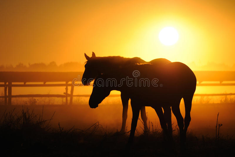 Una manada de caballos en el amanecer imagenes de archivo