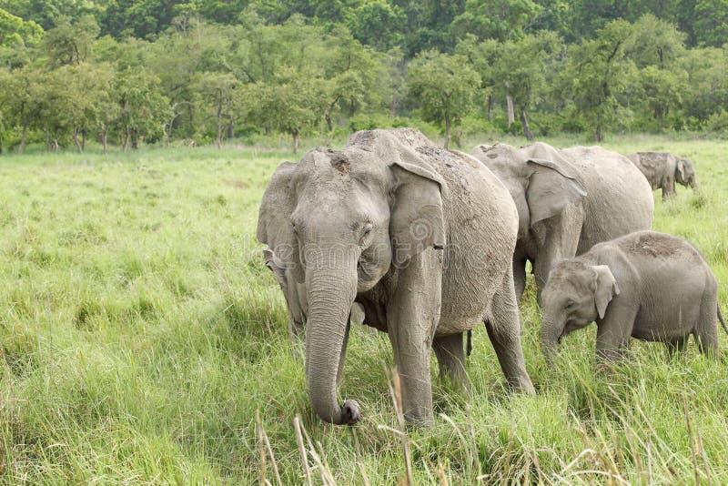 Multa Elefante Uñas Colmillo Significado De Diseño Ideas Ornamento ...