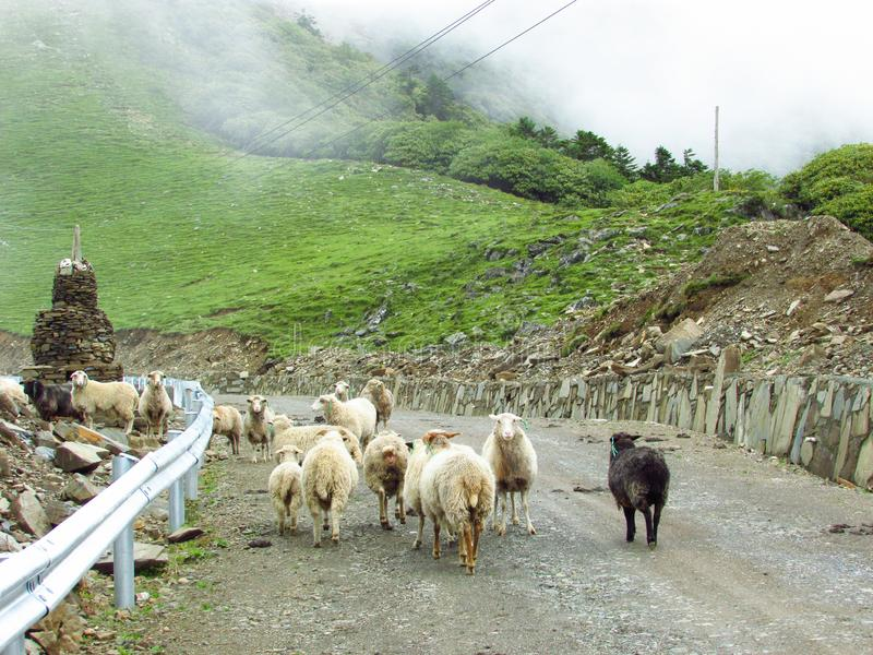 Una manada de la cabra en el rockfill foto de archivo libre de regalías