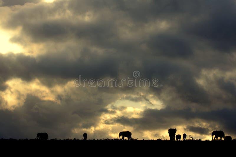 Una manada del elefante contra un cielo surafricano perfecto de la puesta del sol imagenes de archivo