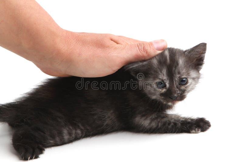 Una mano accarezza un gattino nero su un fondo bianco fotografia stock libera da diritti