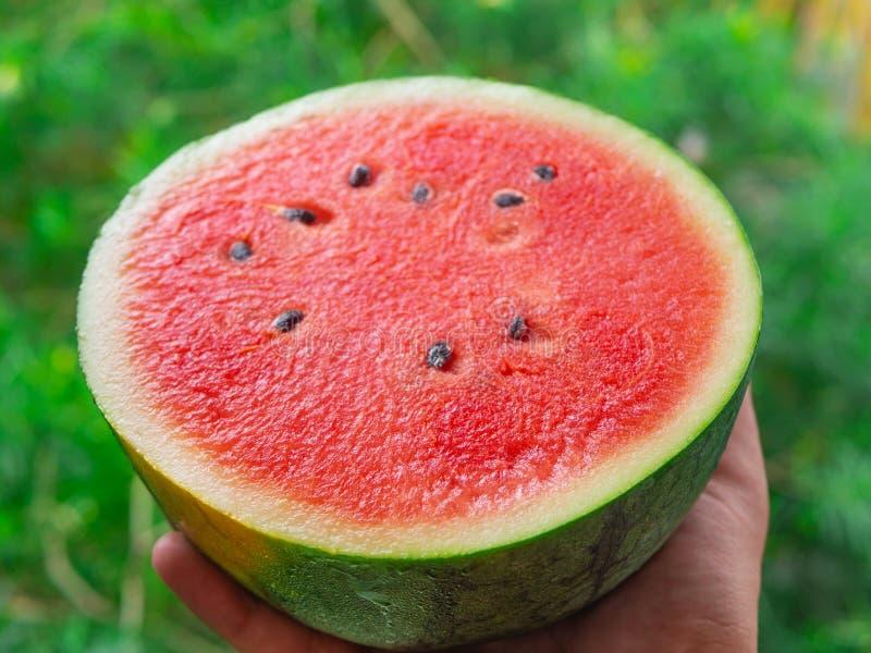 Una mano che tiene metà succosa fresca dell'anguria, primo piano estremo immagine stock libera da diritti