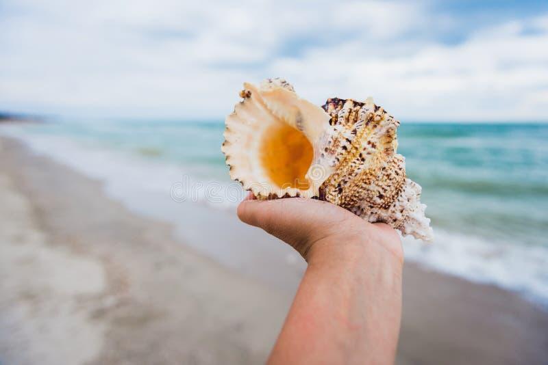Una mano che tiene una grande conchiglia sul fondo tropicale della spiaggia immagine stock libera da diritti