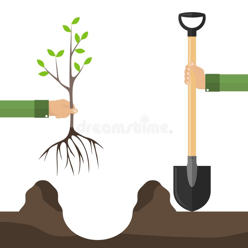 Una mano con una pala pianta una piantina dell'albero Il concetto di piantatura dell'albero Una mano tiene una pala, l'altra tien royalty illustrazione gratis