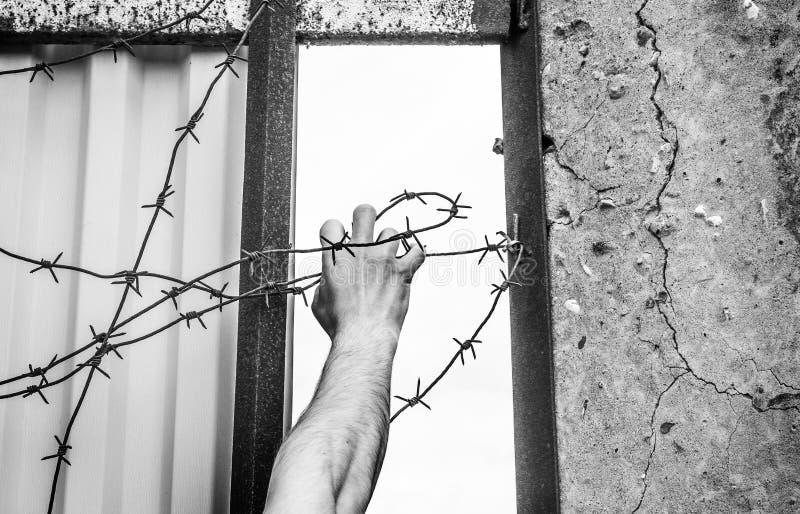 Una mano contra el contexto de un alambre de púas estira a la libertad, pájaro Concepto de éxito, aventura imagenes de archivo
