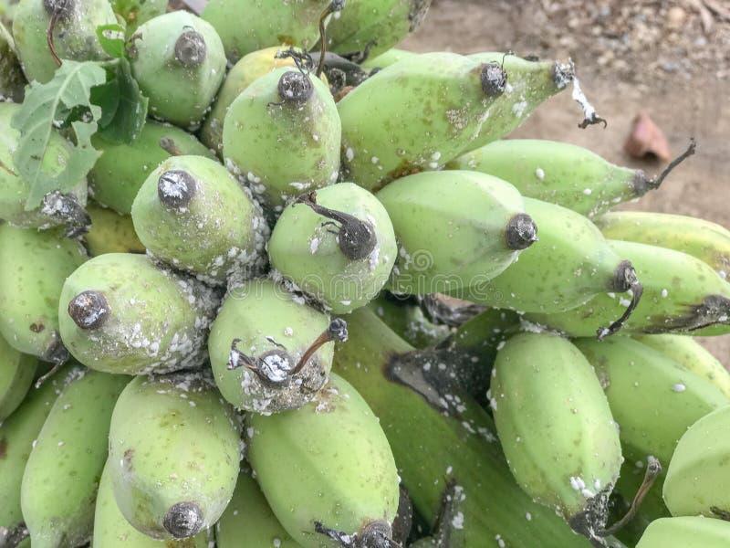 Una mano delle banane verdi fotografia stock