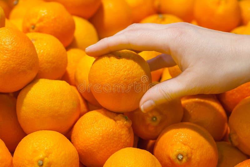 Una mano femenina toma a naranja clementinas las frutas fotos de archivo libres de regalías