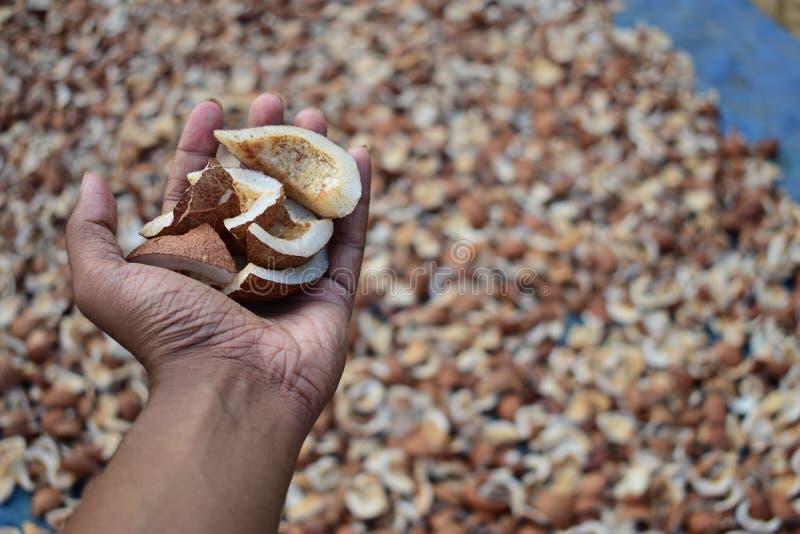 Una mano por completo de los pedazos secados del coco imágenes de archivo libres de regalías