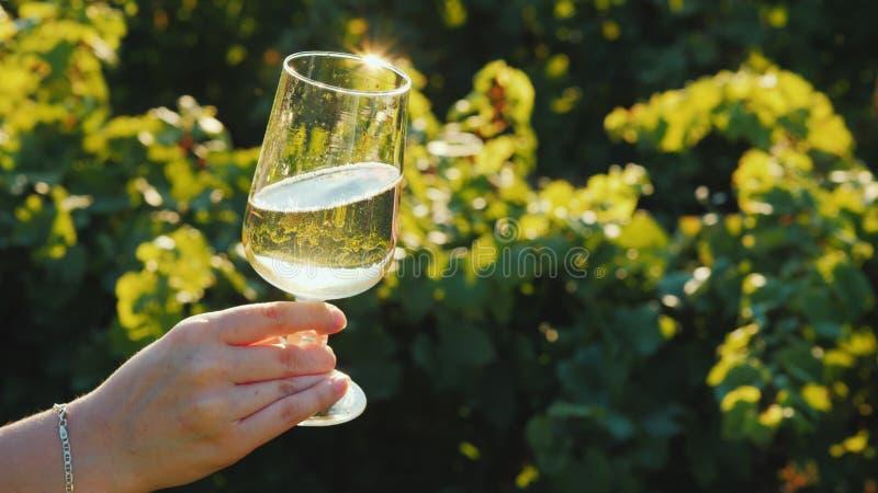 Una mano sta tenendo un vetro con vino bianco contro lo sfondo di una vigna Assaggio di vino alla cantina immagine stock