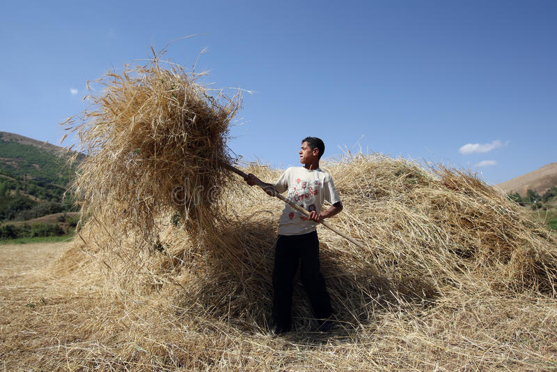 Una manodopera agricola curda vicino a Tatvan in Turchia fotografie stock