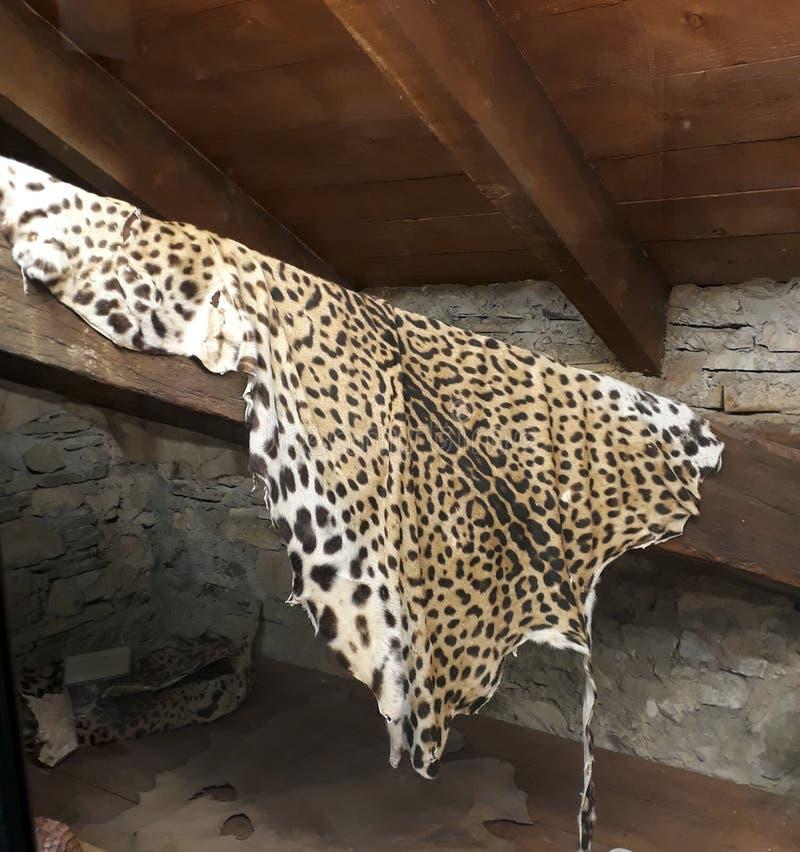 Una manta del leopardo imagenes de archivo