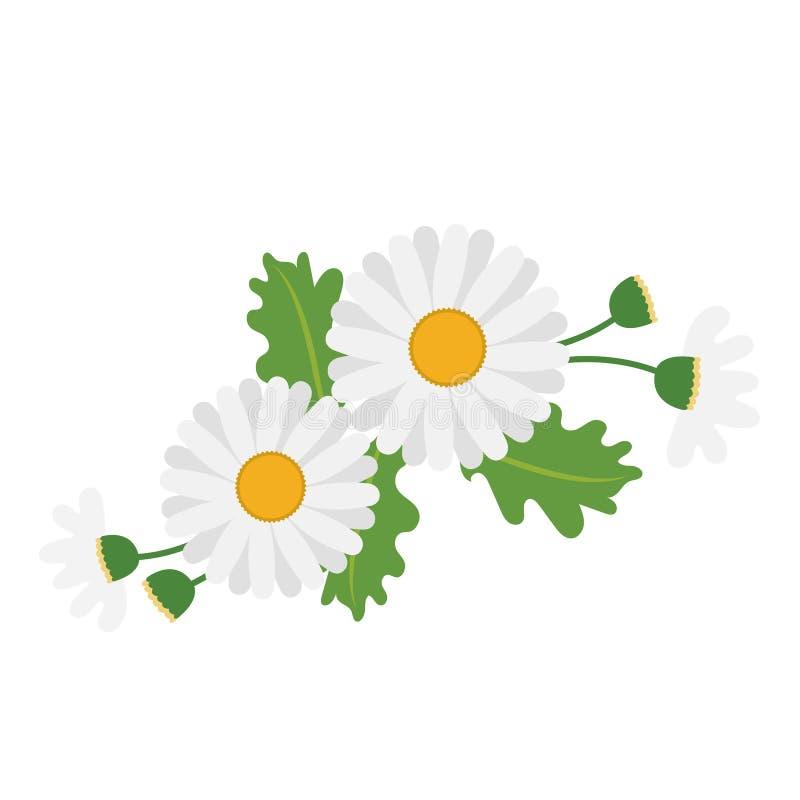 Una margarita blanca de la flor de la naturaleza stock de ilustración