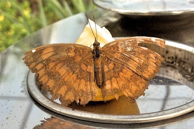 Una mariposa anaranjada fotografía de archivo