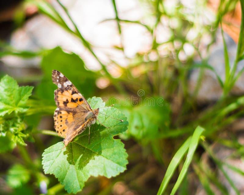 Una mariposa en una planta verde fotografía de archivo