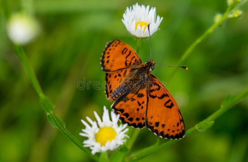 Una mariposa hermosa y rara se sentó en una flor en un día de verano hermoso fotografía de archivo
