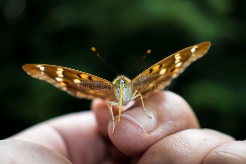 Una mariposa muy hermosa de la mariposa, se sentó en mis fingeres en mi palma Un momento inesperado Naturaleza hermosa ci?rrese e foto de archivo