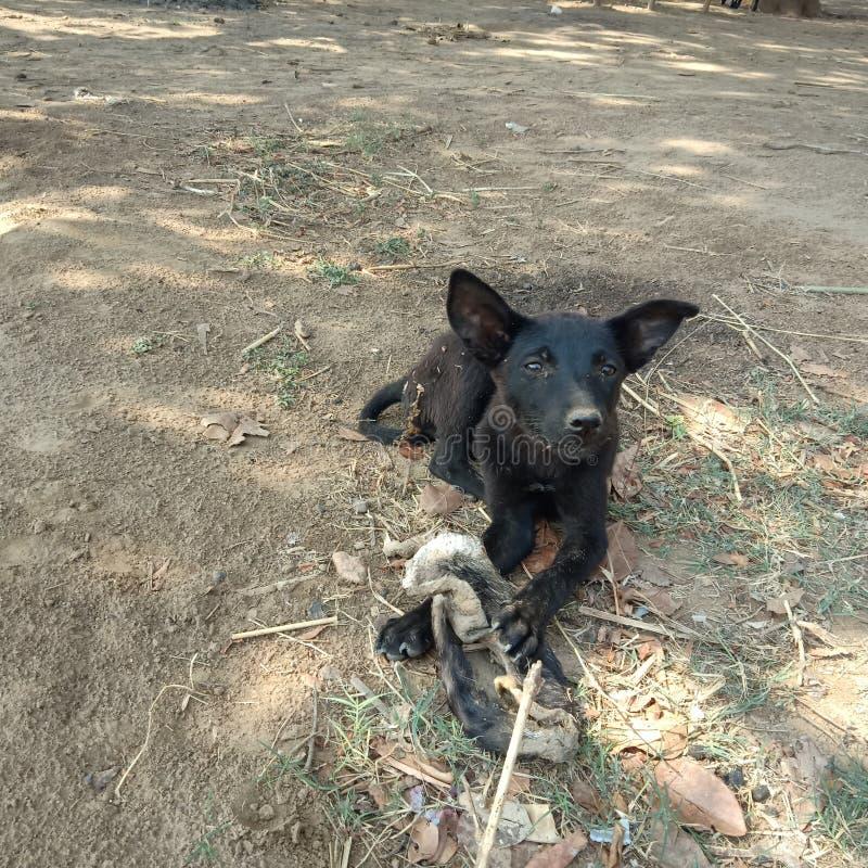 Una masticación del perro del hueso imagen de archivo
