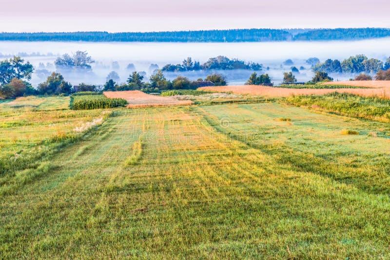 Una mattina nebbiosa nella campagna immagini stock